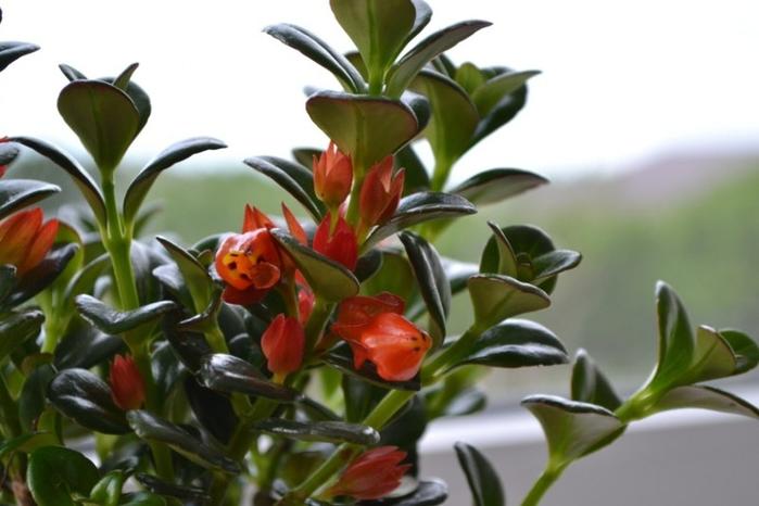 Необычные комнатные растения, которые вас удивят. 408473.jpeg