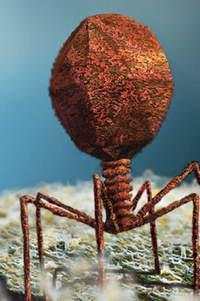 Древние вирусы против современных болезней