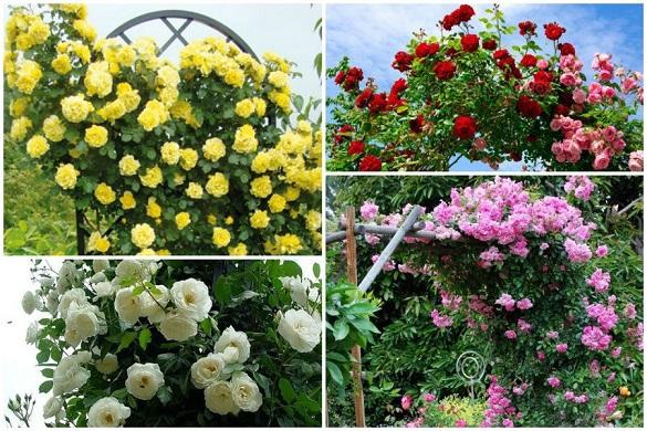 Пять красивых многолетних цветов для посадки около забора. 403476.jpeg