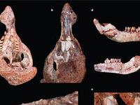 """Археологи откопали останки белки из """"Ледникового периода"""". 248477.jpeg"""