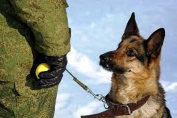 Главные правила воспитания собаки. 395479.jpeg