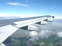 Птица вернула самолет в Москву