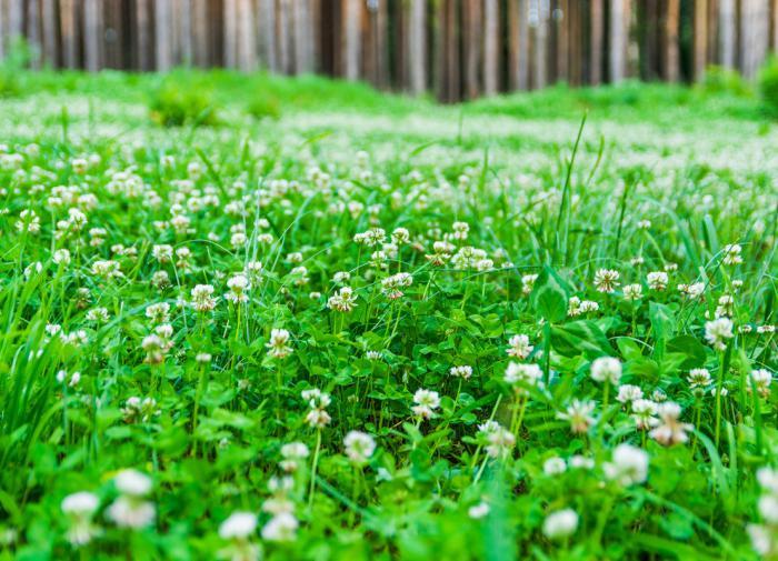 Новый грипп все-таки перешел в пандемию