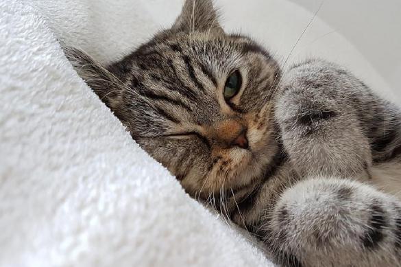 Почему вас царапает кошка. 381490.jpeg