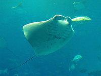 Сеть морских заповедников Австралии защитит треть территориальных вод страны. 260495.jpeg