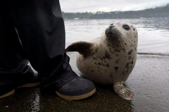 Тюлени загнали рыбака на скалу. 396496.jpeg
