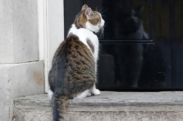 Ученые назвали кошек великими целителями