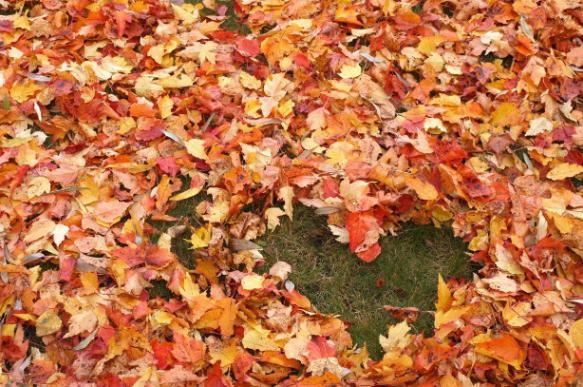 Что делать с опавшими листьями в саду?. 394499.jpeg