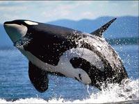 На австралийское побережье выбросились киты и дельфины