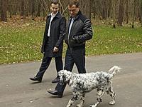 Три собаки Дмитрия Медведева взяли призы