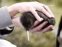 Птица киви из Сочи оказалась обычной выпью. 237502.jpeg