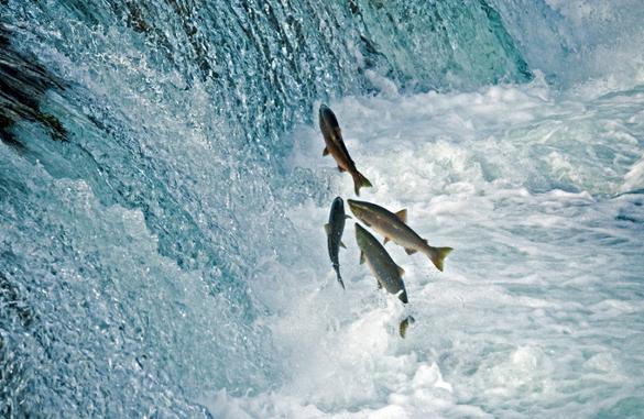 Рыбу уже посчитали. Без разрешения не выловишь