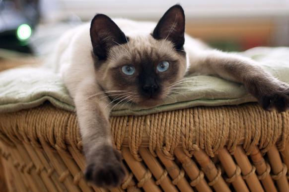 Ученые: кошки копируют своих хозяев как и собаки.