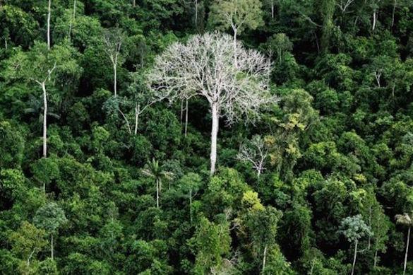 Огромный амазонский заповедник президент Бразилии решил отдать под шахты. 374508.jpeg