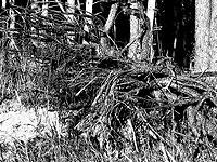 В центре Лондона вырос лес-призрак