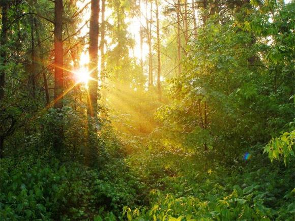 Закон о«лесной амнистии» вступает всилу