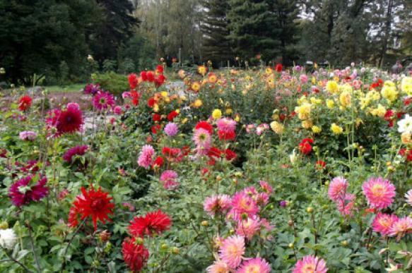 Клумбы для украшения сада: какие выбрать. 396514.jpeg