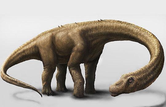 Самый большой скелет титанозавра Dreadnoughtus найден в Аргентине. 297515.jpeg