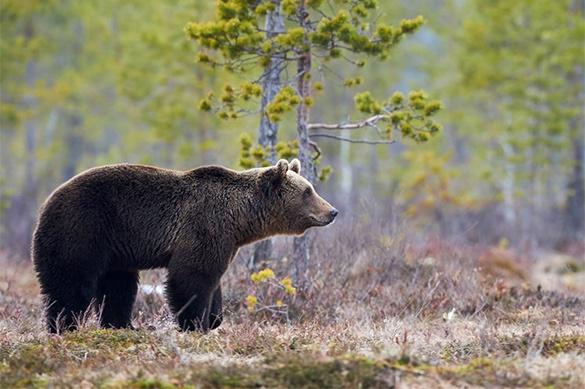 На Сахалине просыпаются медведи