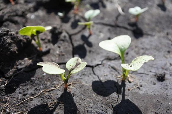 Правила для выращивания крепкой рассады. 401516.jpeg
