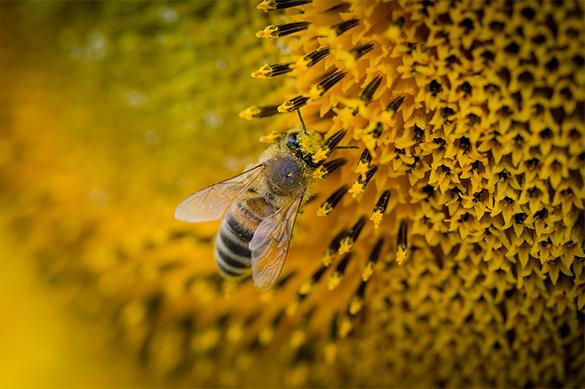 В Башкирии от неизвестного вируса погибли до 90проц. пчел
