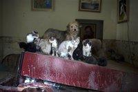 Защитники животных просят запретить петарды. 278523.jpeg