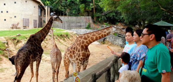 Зоопарк Таиланда приглашает посетителей на ночной сафари. 394524.jpeg