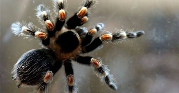 Ученые назвали новых пауков именами актеров и политиков из США. 376526.jpeg
