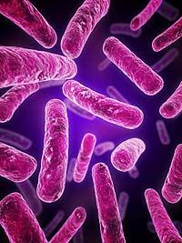 Спасибо бактериям за биокомпьютер