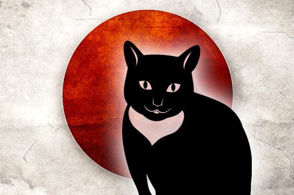 Японский губернатор сообщил о вербовке котом Путина