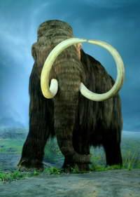 Строгая диета погубила мамонтов
