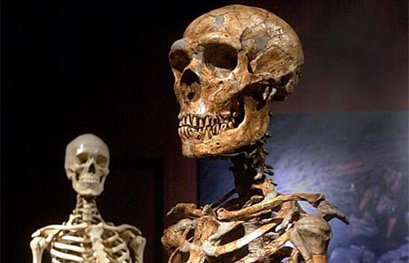 Российские врачи скоро смогут восстанавливать кости. скелет