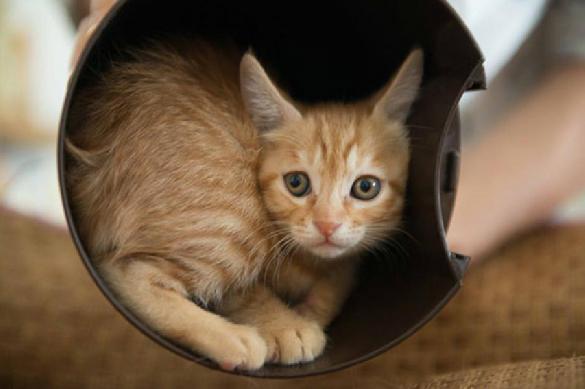 Ветеринары рассказали, как сухой корм убивает кошек. 390530.jpeg