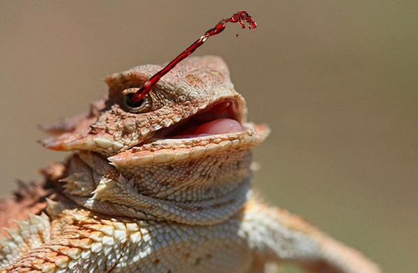 Необычное поведение животных: злопамятные птицы и кровавые слезы. 404530.jpeg