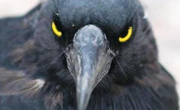 Необычное поведение животных: злопамятные птицы и кровавые слезы. 404533.jpeg