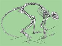 Ученые обнаружили прапрапрабабушку человека