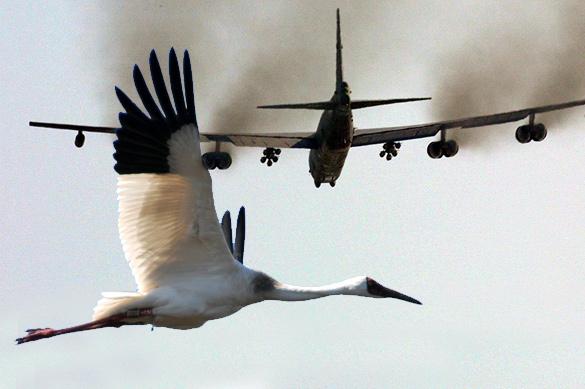 Соцсети: сбивший ядерный B-52 стерх награжден посмертно