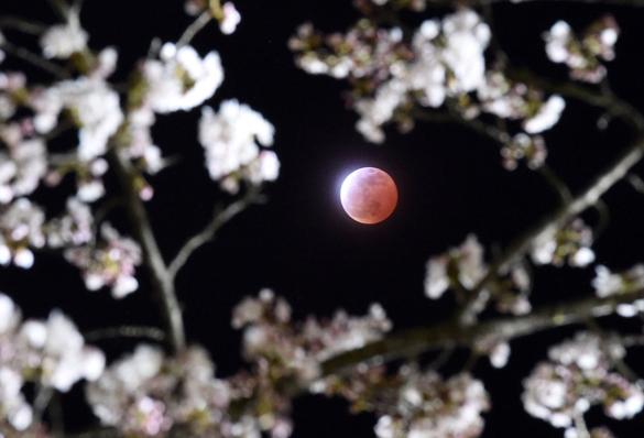 Сегодня над Землей появится кровавая Луна. Кровавая Луна