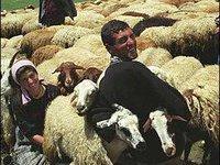 Езидский народ массово мигрирует из Армении. 260537.jpeg