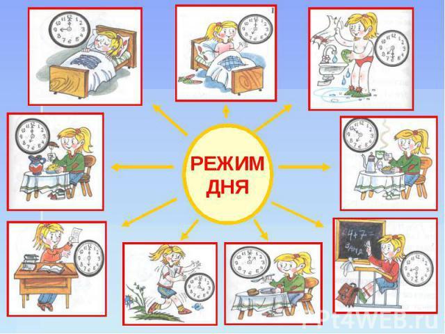 Составлен оптимальный  порядок  дня сучетом биологических часов