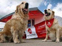 Британские собаки могут стать донорами крови