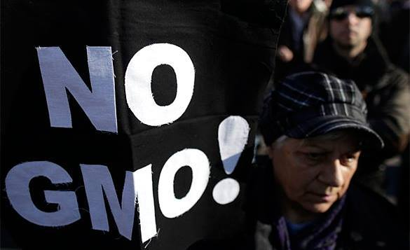 Минсельхоз США может разрешить производителям не уведомлять о содержании ГМО в их продуктах. 321539.jpeg