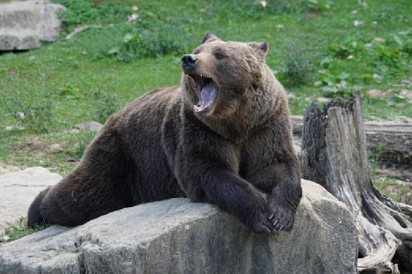 Это - Россия: на семейный пикник пришел медведь. 377539.jpeg