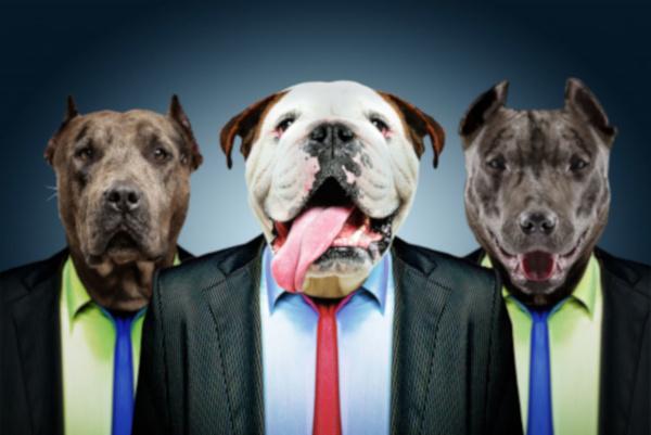 Хозяин на содержании, или как собаки могут зарабатывать деньги. 393545.jpeg
