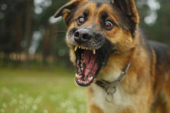 Собака укусила известного российского футболиста ниже спины. Собака укусила известного российского футболиста ниже спины