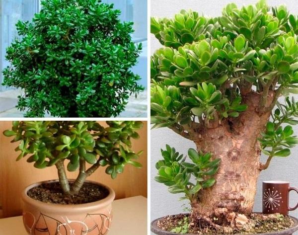 Самые живучие домашние растения. 404547.jpeg