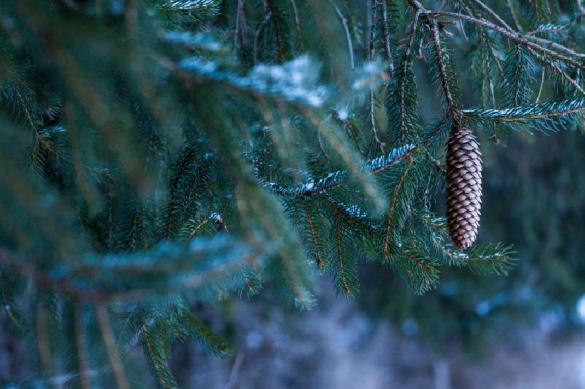 Уралец провел в лесу пять дней, питаясь иголками и снегом. Уралец провел в лесу пять дней, питаясь иголками и снегом