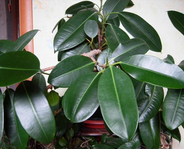 Самые живучие домашние растения. 404548.jpeg