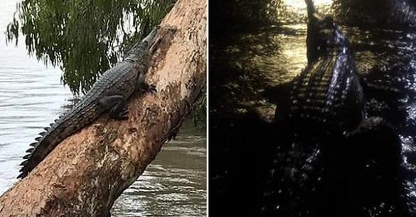 В результате наводнения на улицах Таунсвилла поселились крокодилы. 398551.jpeg