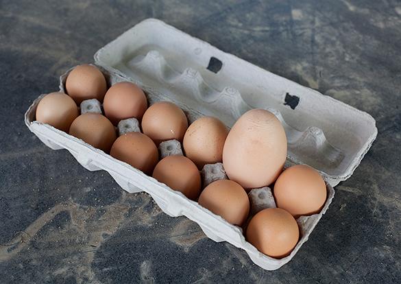Галина Бобылева: Россия обеспечивает себя пищевыми яйцами на 100%. яйца пищевые
